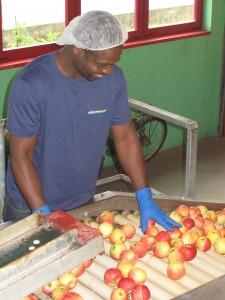 picking-controllo qualita-logistica-alimentare-Vierregroup