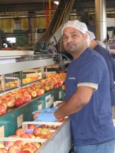 Picking-cernità-di-frutta | Vierregroup